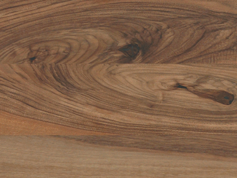 European Walnut