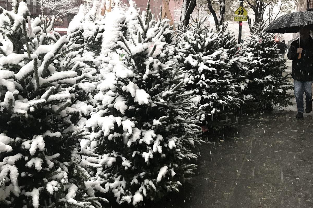 An-English-woman-In-New-York--Christmas-Trees_d2.jpg