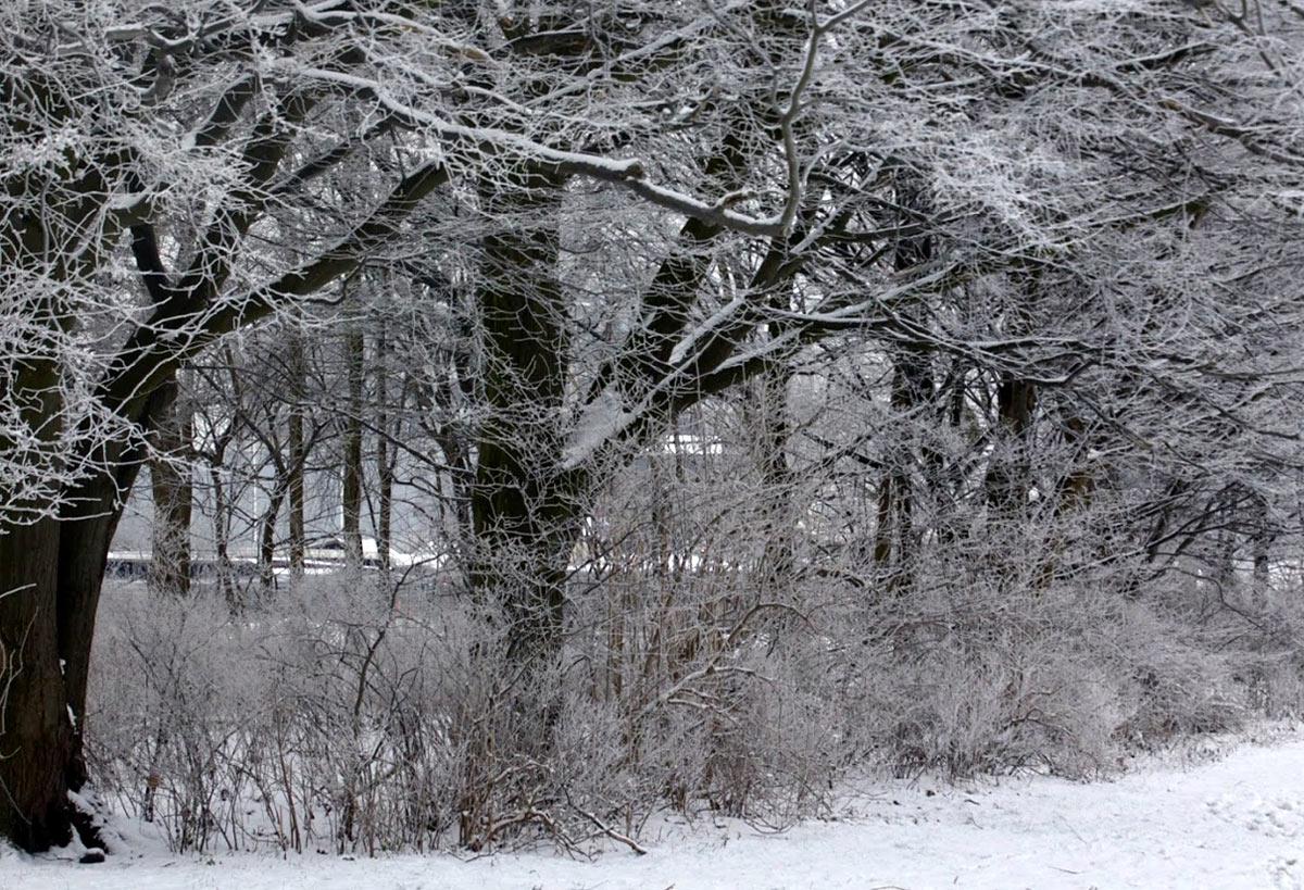 Snowy Danish Weather
