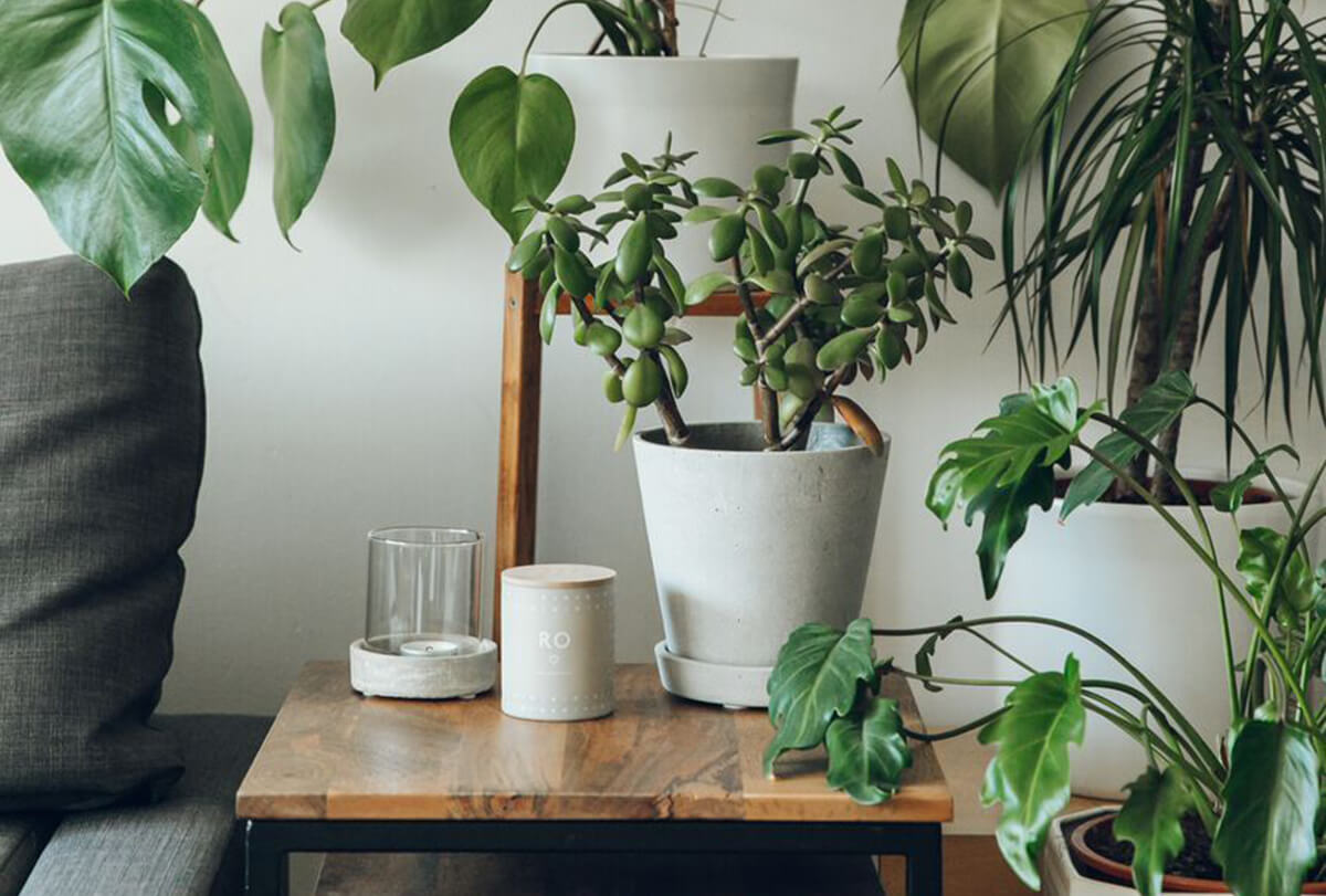 An Indoor Jungle That Thrives - Haarkon