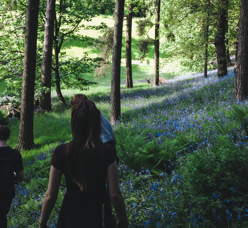 Seek, create and share joy - Bluebell Walks.jpg