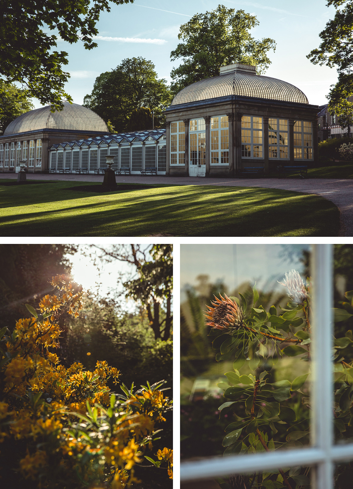 Sheffield-Botanical-Gardens-Images by Max Hawley.jpg