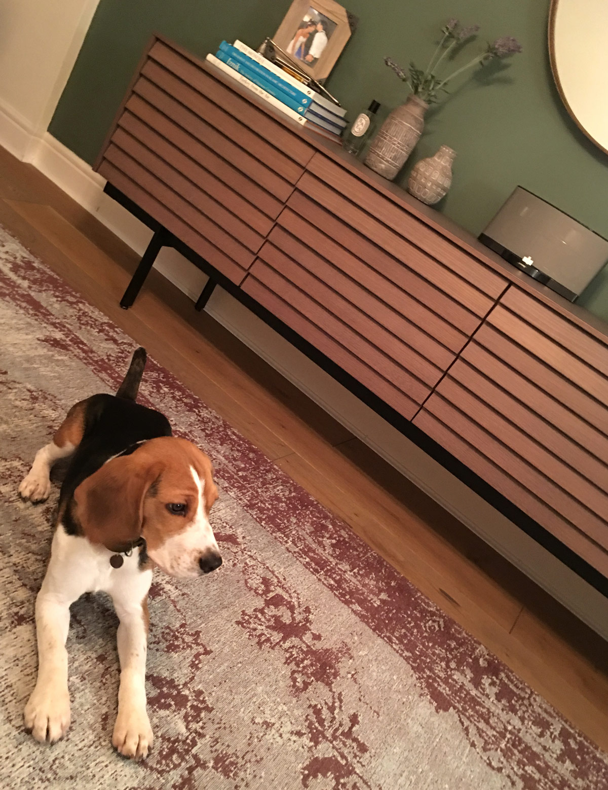 Leo the beagle posing in front of the Punt Sussex Sideboard. Image credit Yasemin Nazli.jpg