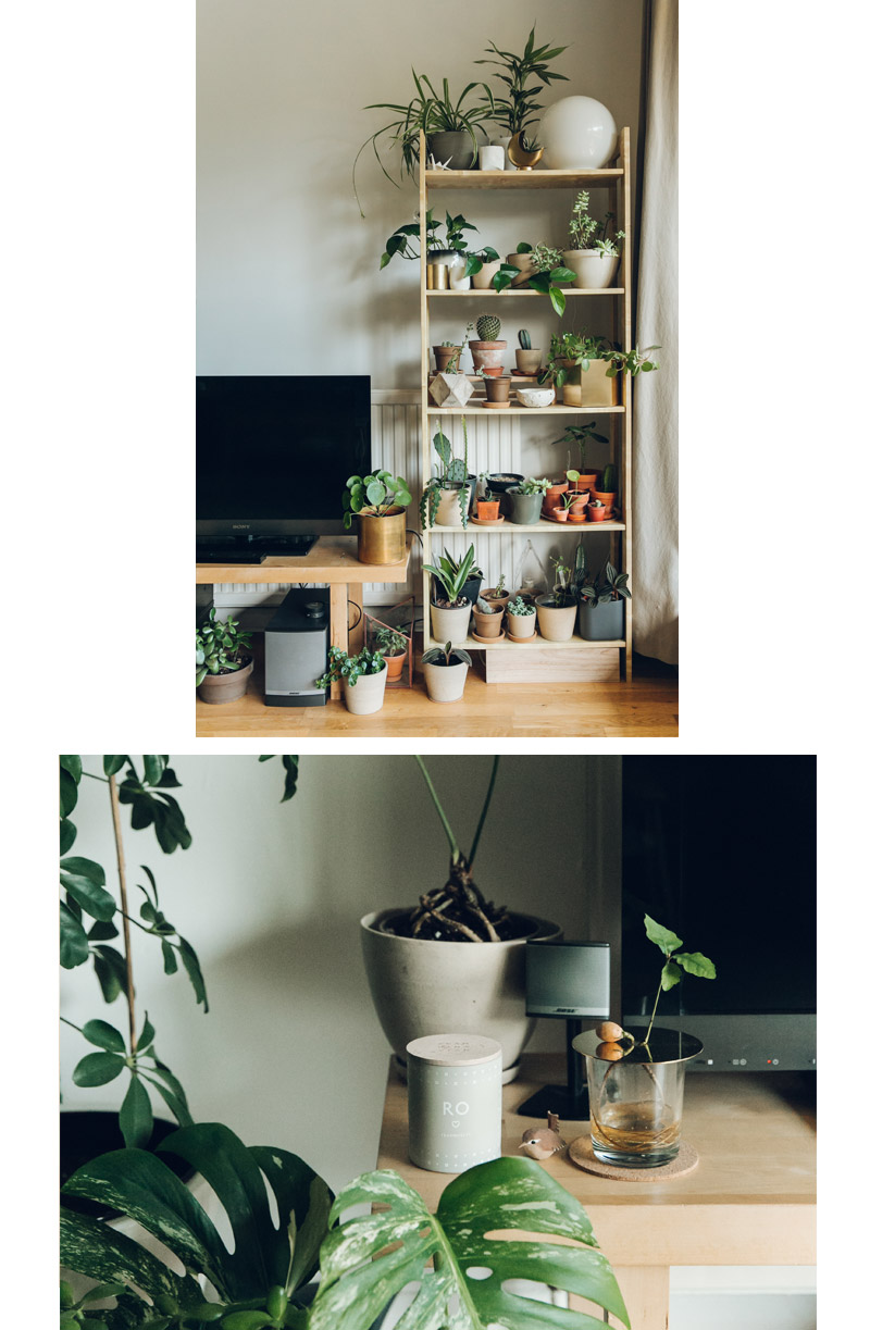 Haarken  -An Indoor Jungle That Thrives –  Ferm Living Hexagon Pot Brass & Skandinavisk Ro (Tranquility) Scented Candle .jpg