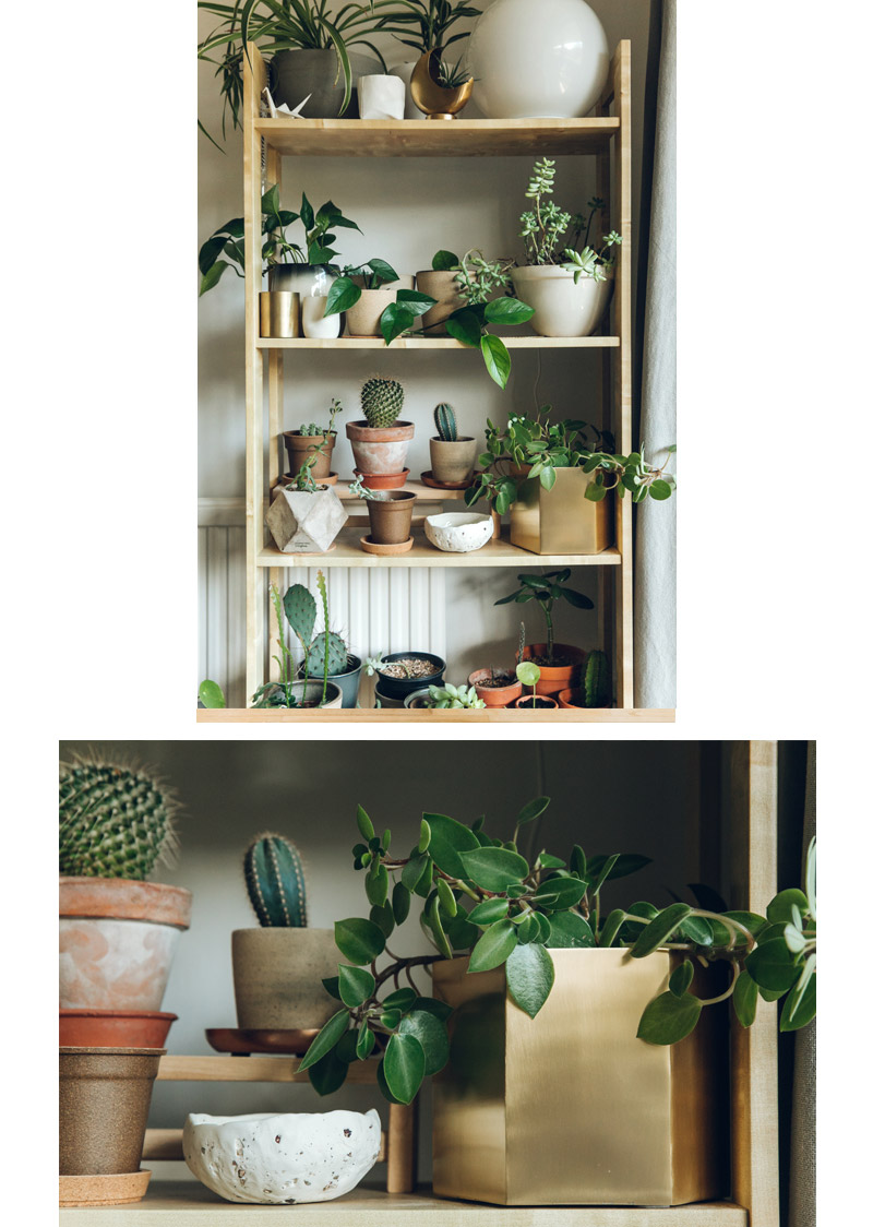 Haarken  -An Indoor Jungle That Thrives – Ferm Living Hexagon Pot Brass.jpg