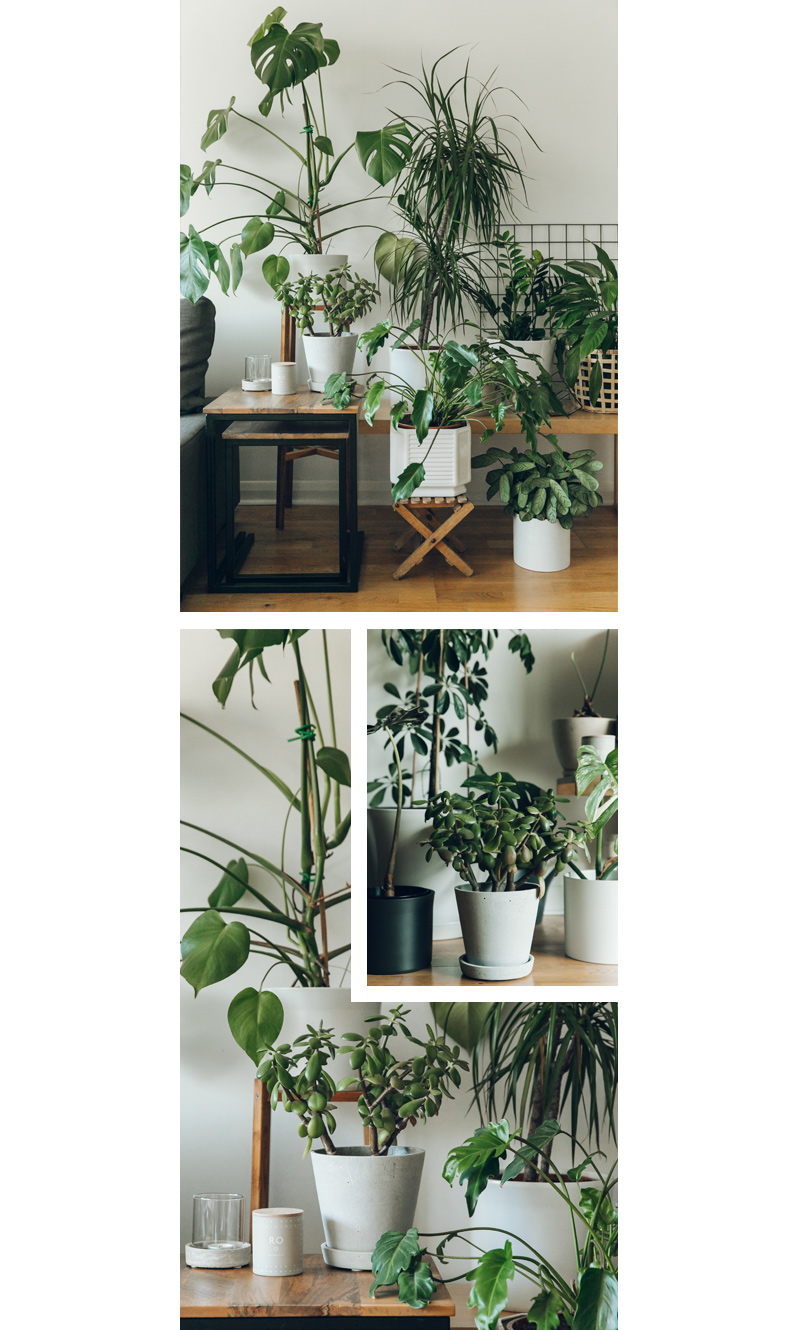 Haarken  -An Indoor Jungle That Thrives – Hay Flowerpot with Saucer.jpg