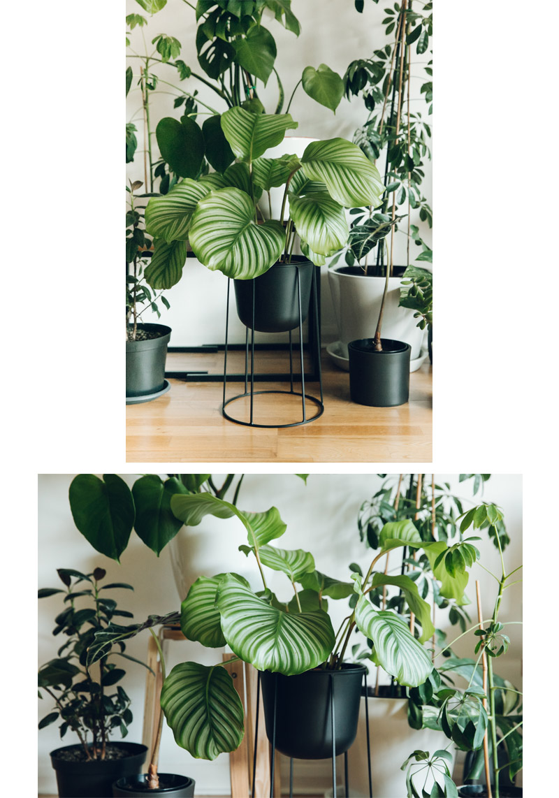 Haarken  -An Indoor Jungle That Thrives – Menu Wire Plant Pot – Black.jpg