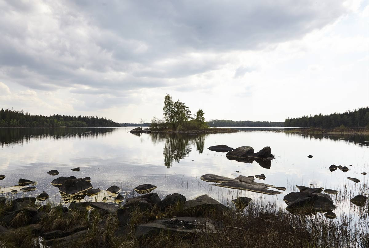 The lake at Stedsens in the Woods.jpg
