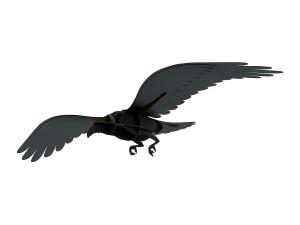 View ibride Adam Flying Raven